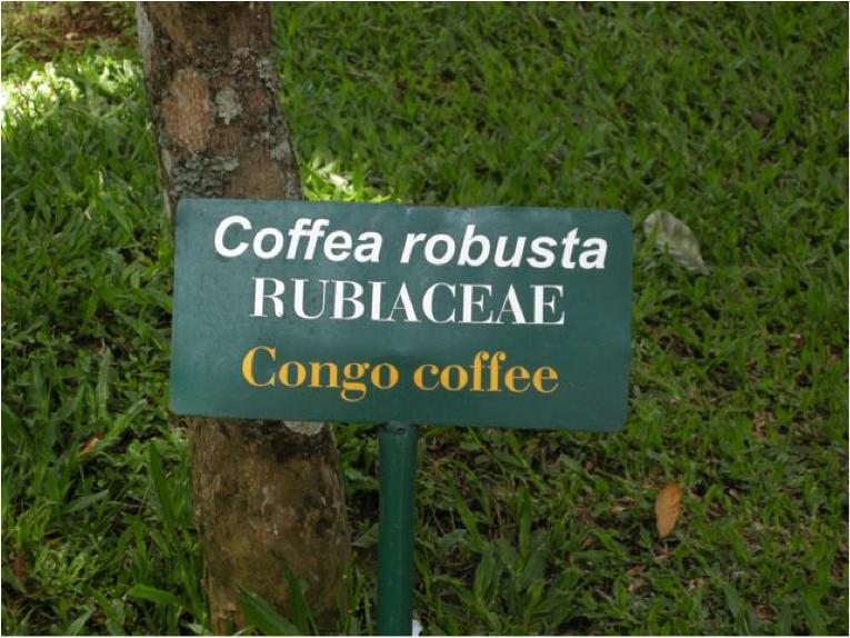 congo coffee
