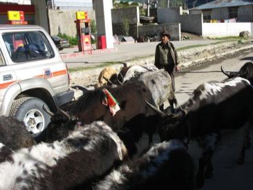 Faces of Tibet 56