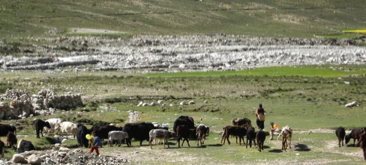 Faces of Tibet 77