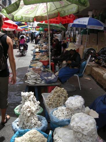 Lhasa 17