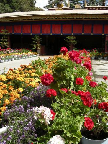 Lhasa 65