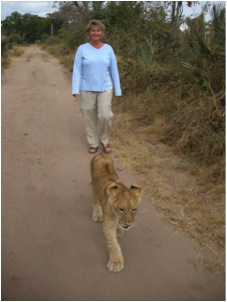 me walking lion