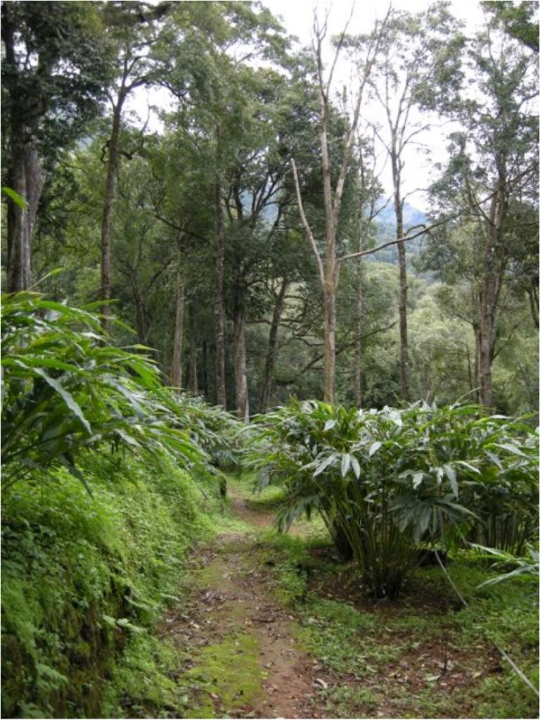 nature walk 1