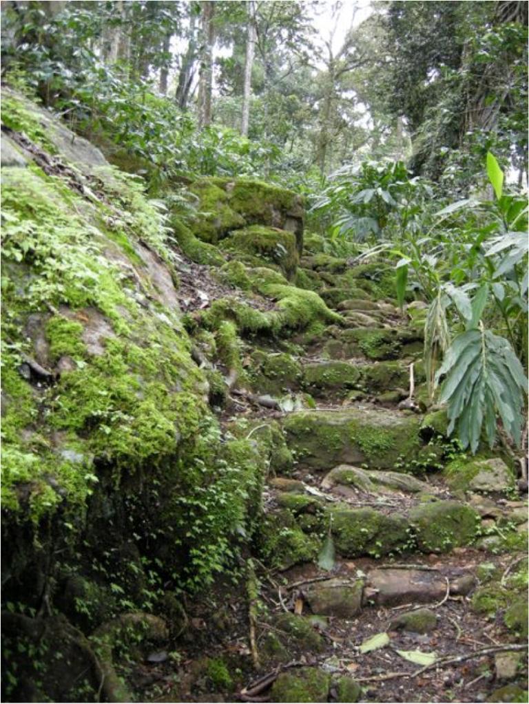 nature walk 2